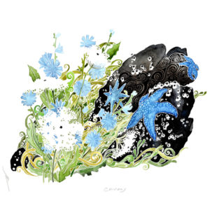 Chicory - print by Pete Sandker