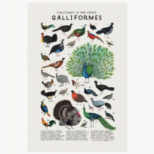 Creatures of the Order Galliformes - print by Kelzuki