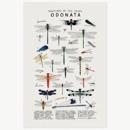 Creatures of the Order Odonata - print by Kelzuki