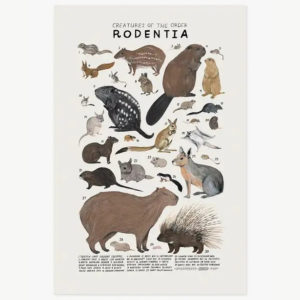 Creatures of the Order Rodentia - print by Kelzuki